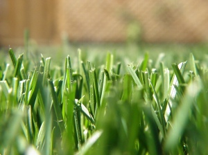 Fresh-cut grass